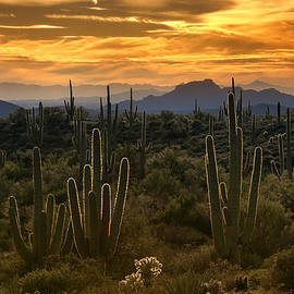 Saija  Lehtonen - A Golden Sonoran Sunset