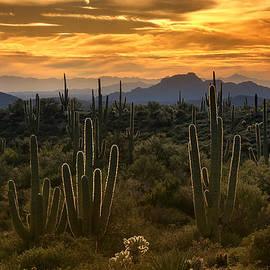 A Golden Sonoran Sunset  by Saija  Lehtonen