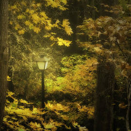Diane Schuster - A Light In the Autumnal Forest