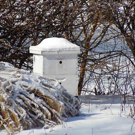 Teresa Schomig - A Lonely Beehive