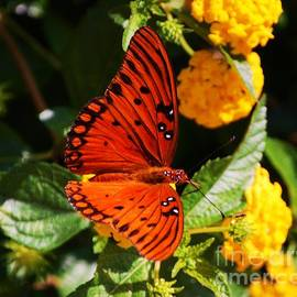 A Portrait Of A Monarch Butterfly In Bermuda Vision # 3 by Marcus Dagan