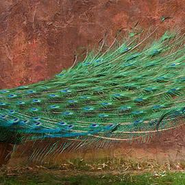 A Peacock DP by Ernie Echols