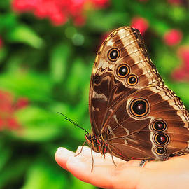 A Random Walk In The Butterfly Garden by Photography  By Sai