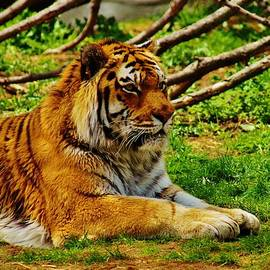 Daniel Thompson - A Real Detroit Tiger