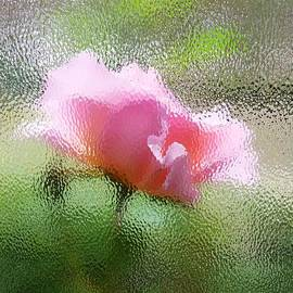 Connie Bazinet - A rose colored glass