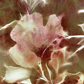 EricaMaxine  Price - A Rose of Sharon