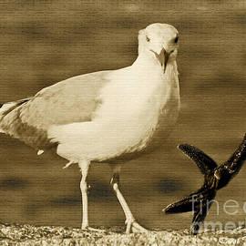 A Seagull Kind of Day by Carol F Austin
