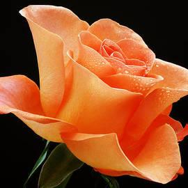 A Single Bloom 1 by Wendy Wilton