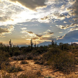 A Sonoran Desert Sunset  by Saija  Lehtonen