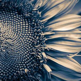 Isabel Laurent - A Sunflower Dream