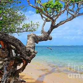 A Swing by the Sea at Anini by Kris Hiemstra