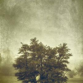 Scott Norris - A Tree in the Fog 2