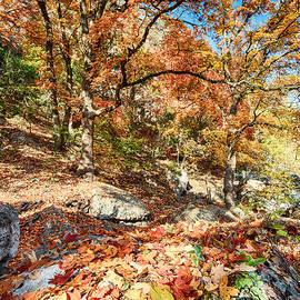 A Walk Through The Maple Trail by Silvio Ligutti