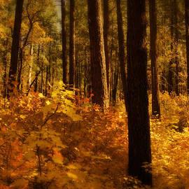 Saija  Lehtonen - A Walk Through the Woods