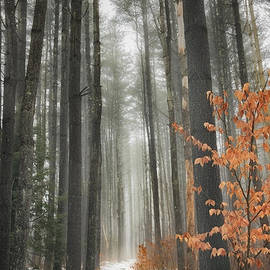 A Winters Path by Bill Wakeley