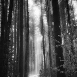 A WInters Path Black And White by Bill Wakeley