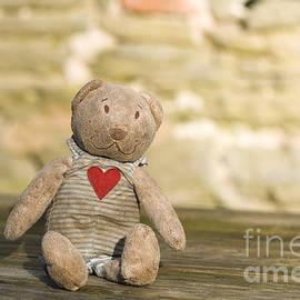 Anne Gilbert - Abandoned Bear