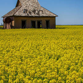 Jim McCain - Abandoned House in a Field of Canola