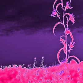 Abstract Flower in Pink with Purple Sky by Minding My  Visions by Adri and Ray