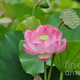 Abstract Lotus by Nona Kumah