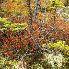 Acadia Autumn Wonders by Chris Scroggins