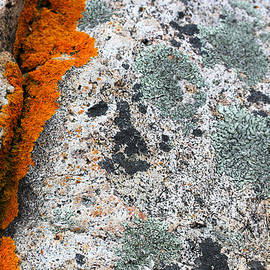 Acadia Granite 1 by Mary Bedy