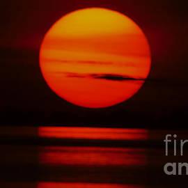 African Sun by Mareko Marciniak
