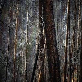 Newel Hunter - After the Burn 6