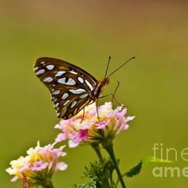 Afternoon Nectar by Scott Pellegrin