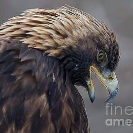Golden Eagle by Gina Levesque
