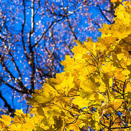 Alexander Senin - Alchemy Of Nature - Golden Streams