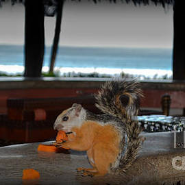 Gary Keesler - All Inclusive Squirrel