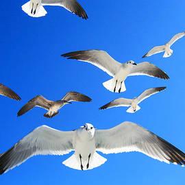 The Hitchcock Birds by Iryna Goodall