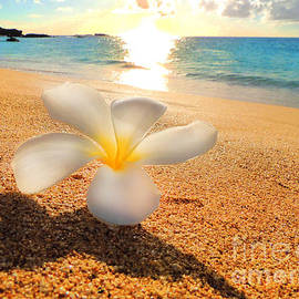 Kristine Merc - Aloha Paradise