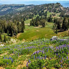 Alpine Meadow by Robert Bales