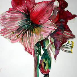 Amaryllis by Mindy Newman