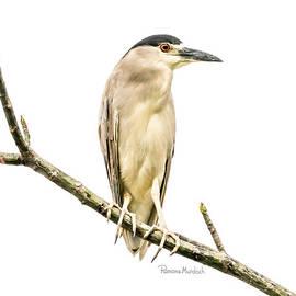 Amazonian Heron by Ramona Murdock