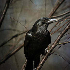 American Crow by Lois Bryan