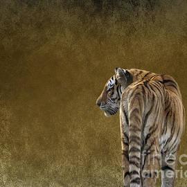 Terri Waters - Amur Tiger