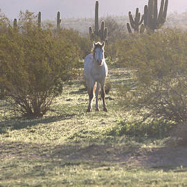 Horse On An Arizona morning by Ruth Jolly