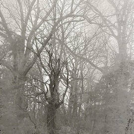 Matthew Schenk - And the Tree Came Toward Us