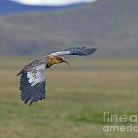 Nina Stavlund - Andean Pride...