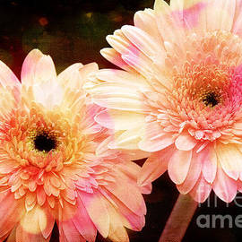Andee Design Gerber Daisies 3 by Andee Design