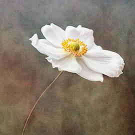 Anemone by Claudia Moeckel
