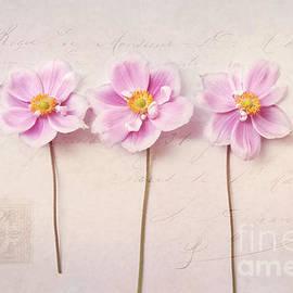 Anemone Trio by Sylvia Cook