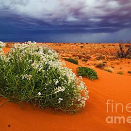 Peter Kneen - Approaching Desert Storm in the Simpson Desert