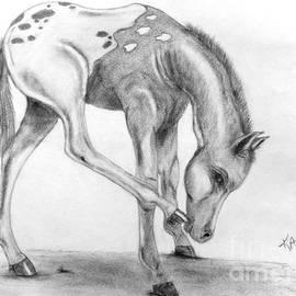 Kami Catherman - Appy foal
