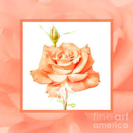 Mona Stut - Apricot Rose Love