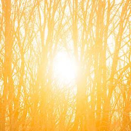April Sunrise by Diane Diederich
