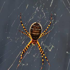 Karen Slagle - Arachnophobia